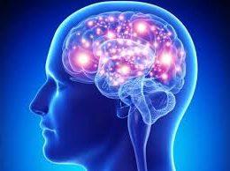 14 fapte curioase despre cum funcţionează creierul nostru